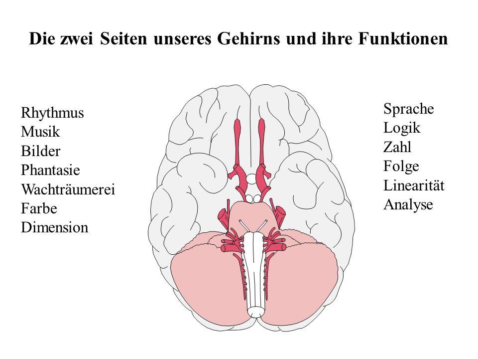 Die zwei Seiten unseres Gehirns und ihre Funktionen