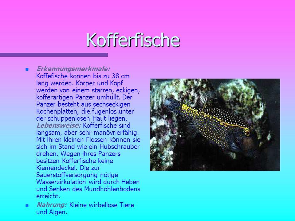 Kofferfische