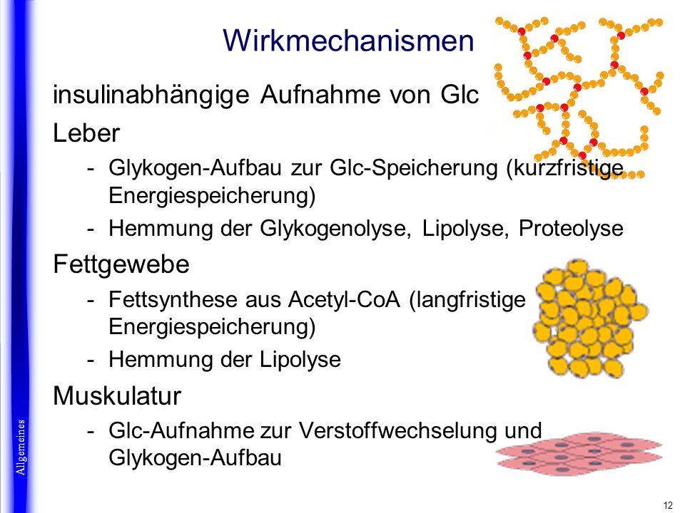 Wirkmechanismen insulinabhängige Aufnahme von Glc Leber Fettgewebe