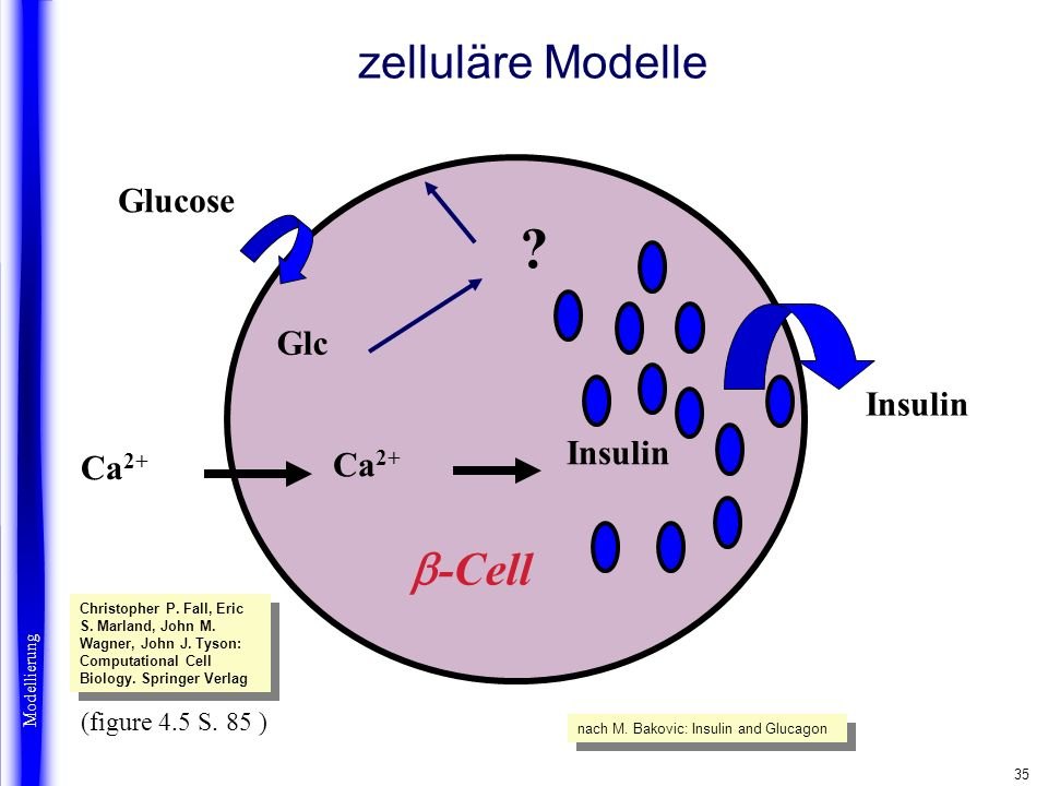 zelluläre Modelle b-Cell Glucose Glc Insulin Beta cells Ca2+