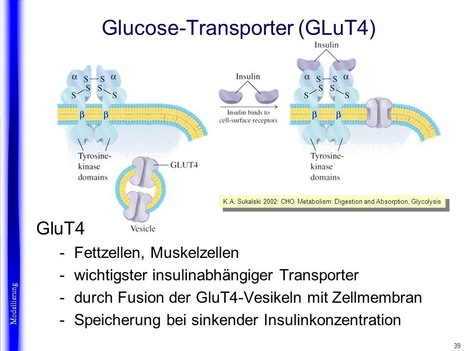 Glucose-Transporter (GLuT4)