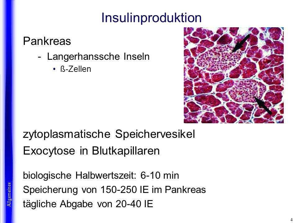 Insulinproduktion Pankreas zytoplasmatische Speichervesikel
