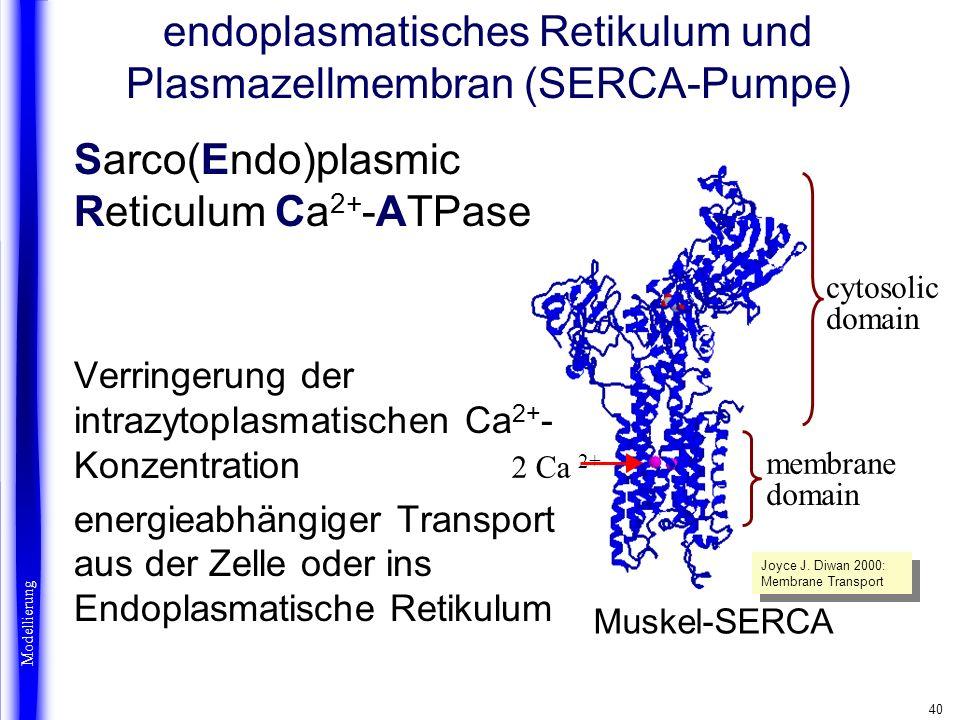 endoplasmatisches Retikulum und Plasmazellmembran (SERCA-Pumpe)
