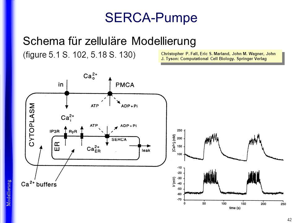 SERCA-Pumpe Schema für zelluläre Modellierung