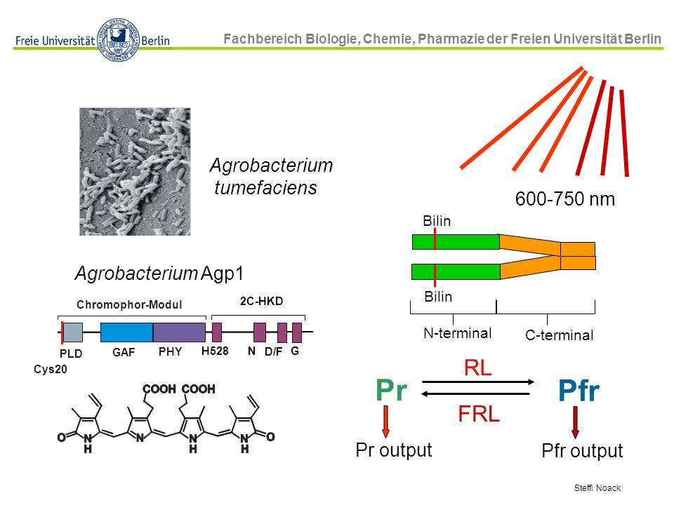 Pr Pfr RL FRL Agrobacterium tumefaciens 600-750 nm Agrobacterium Agp1