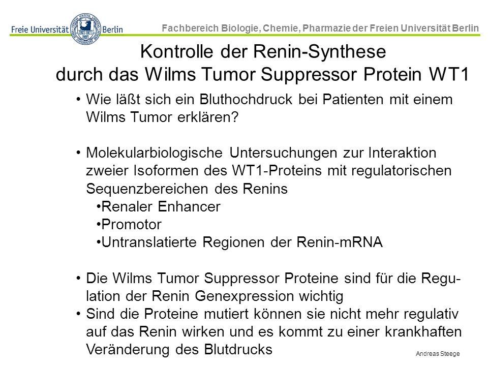 Kontrolle der Renin-Synthese