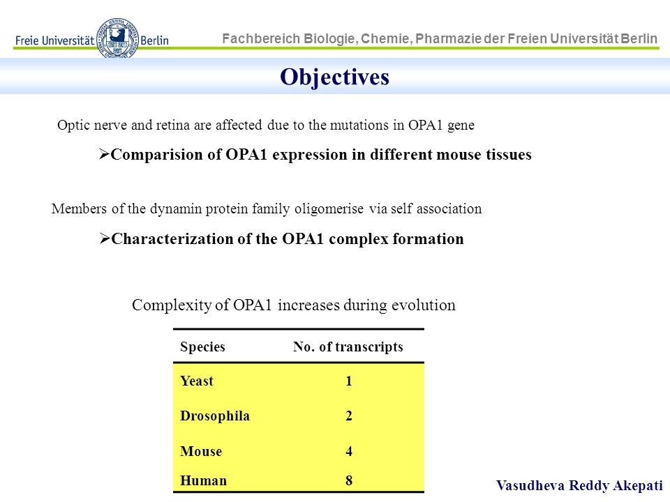 Objectives Comparision of OPA1 expression in different mouse tissues