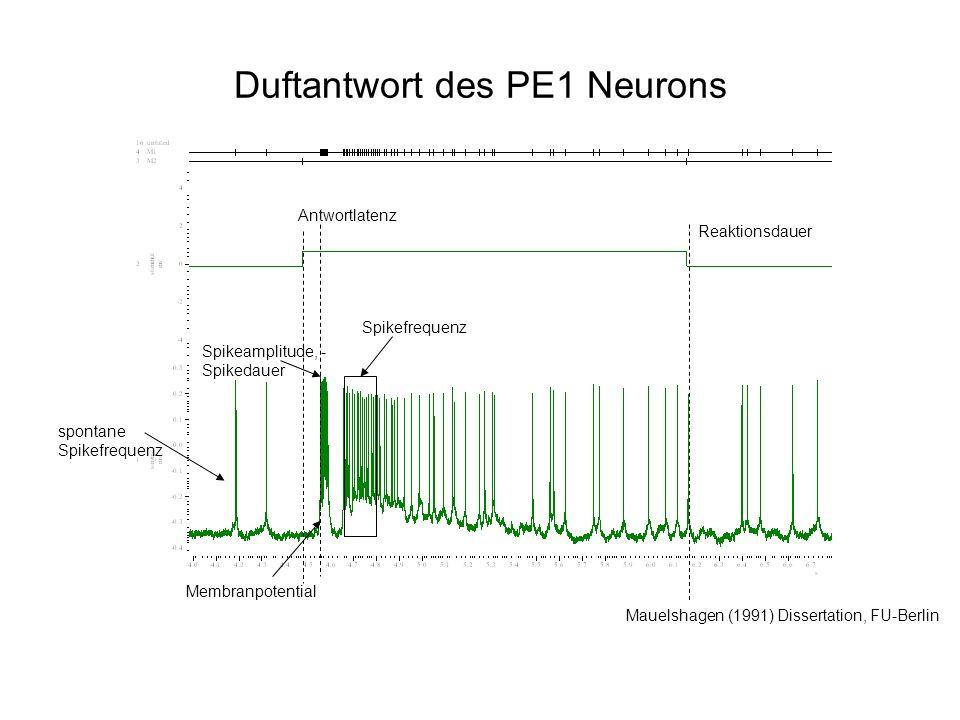 Duftantwort des PE1 Neurons