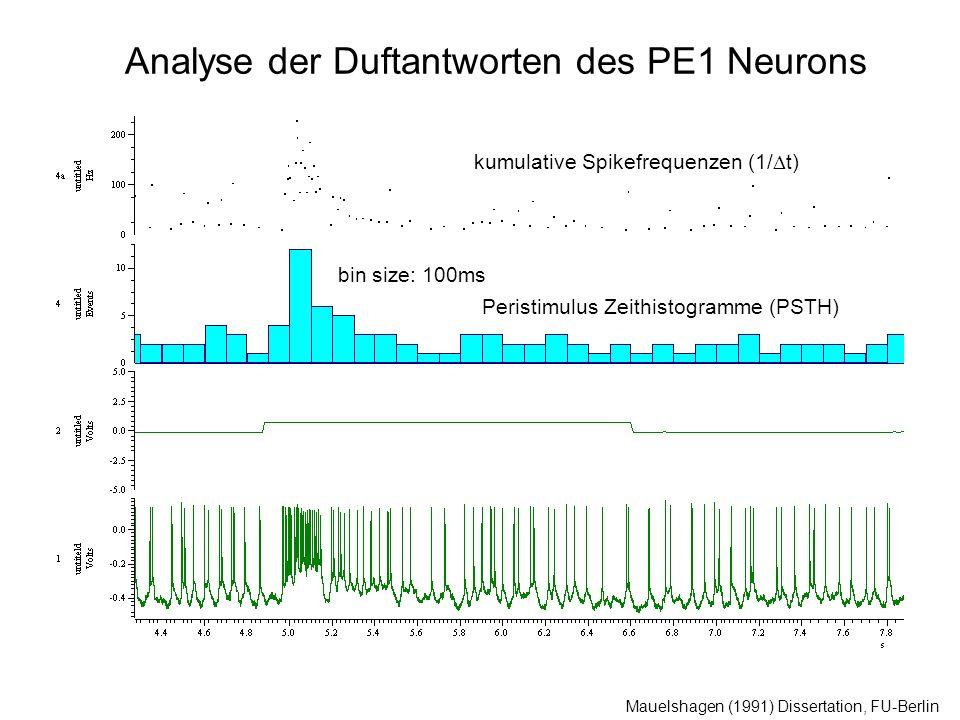 Analyse der Duftantworten des PE1 Neurons