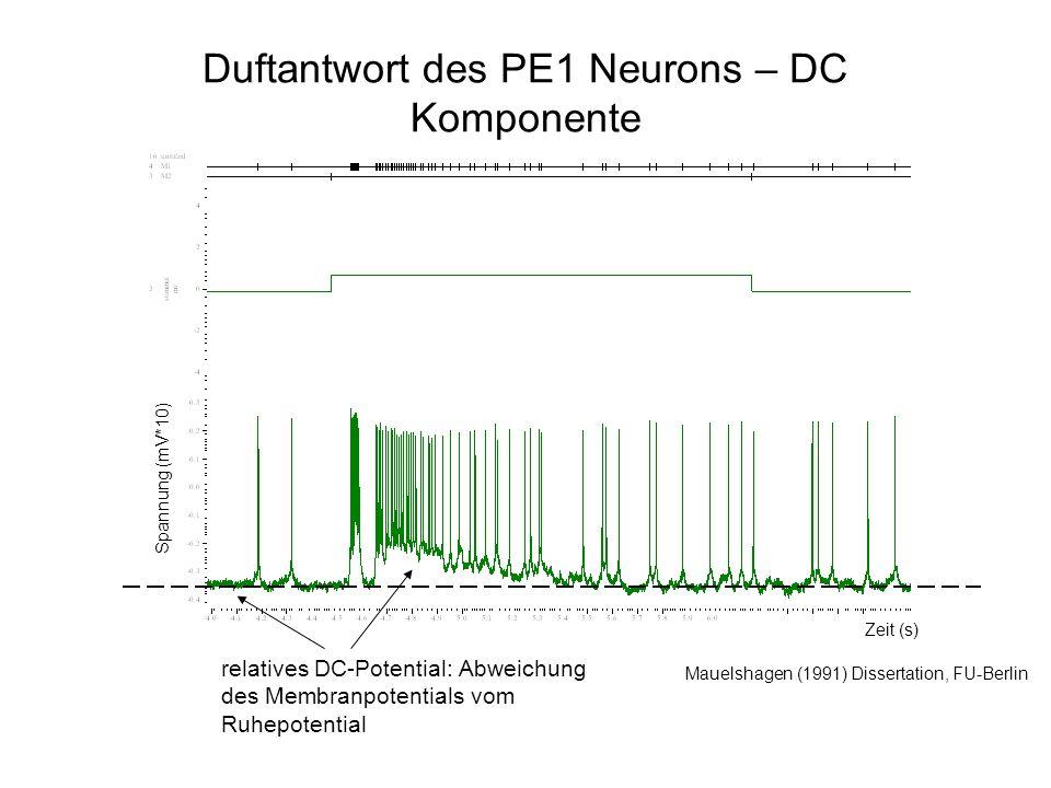 Duftantwort des PE1 Neurons – DC Komponente