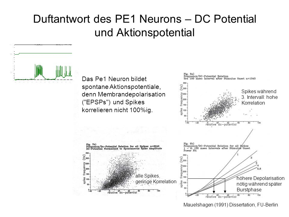 Duftantwort des PE1 Neurons – DC Potential und Aktionspotential