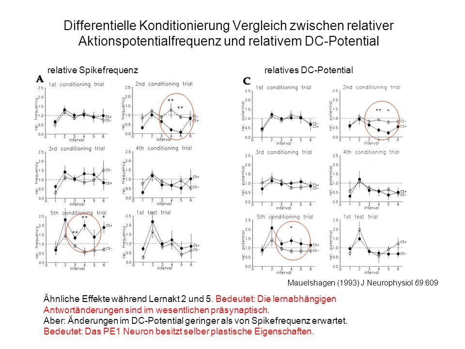 Differentielle Konditionierung Vergleich zwischen relativer Aktionspotentialfrequenz und relativem DC-Potential