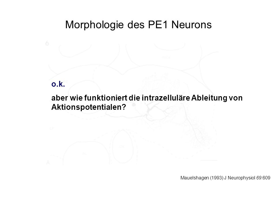Morphologie des PE1 Neurons