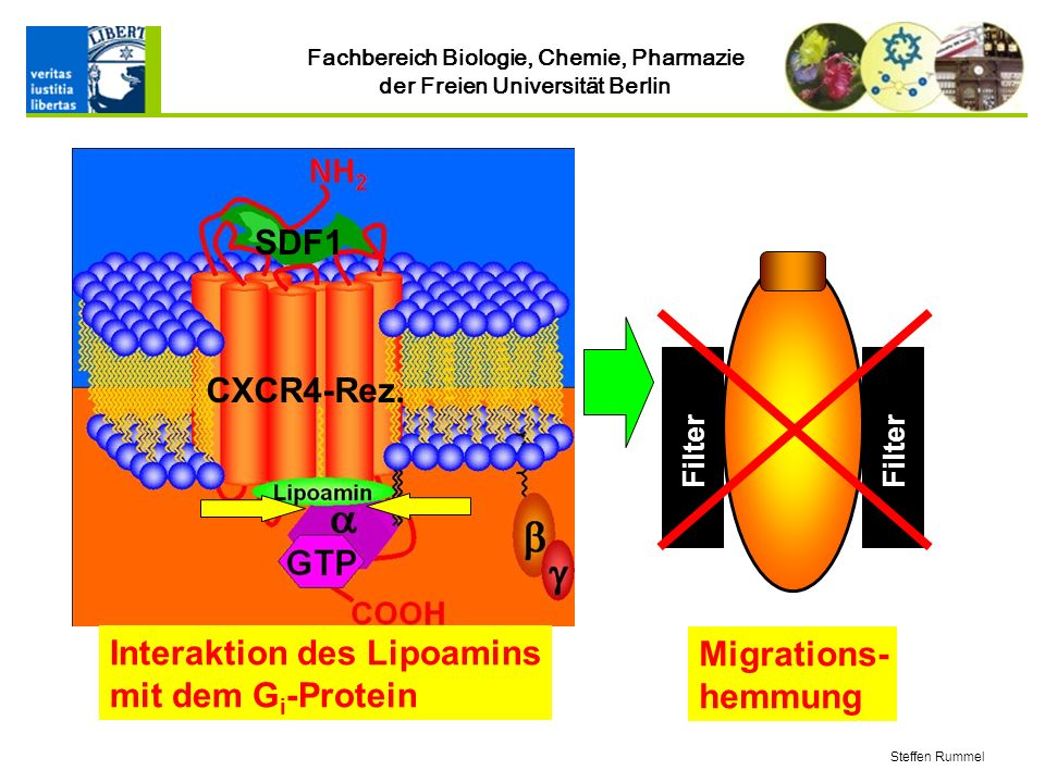 Interaktion des Lipoamins mit dem Gi-Protein SDF1