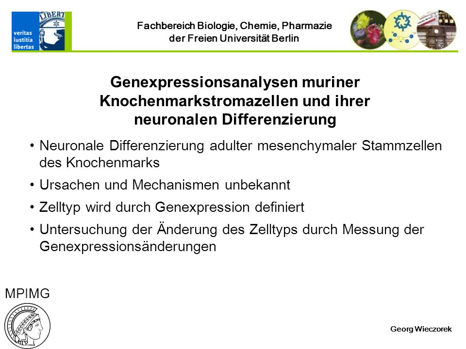 Genexpressionsanalysen muriner Knochenmarkstromazellen und ihrer neuronalen Differenzierung