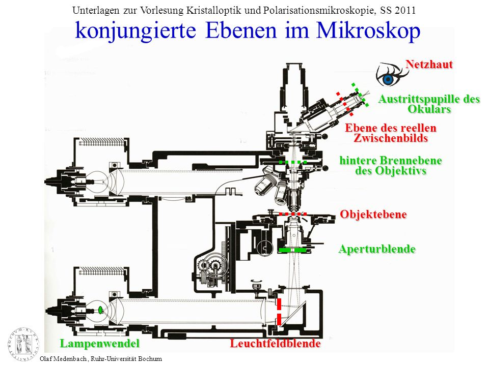 konjungierte Ebenen im Mikroskop