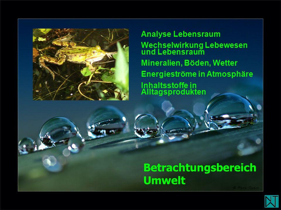 Betrachtungsbereich Umwelt Analyse Lebensraum
