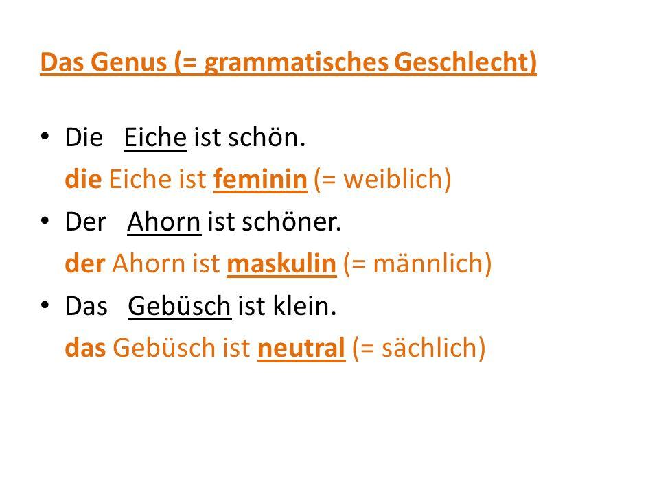 Das Genus (= grammatisches Geschlecht)