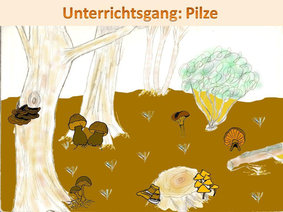 Unterrichtsgang: Pilze