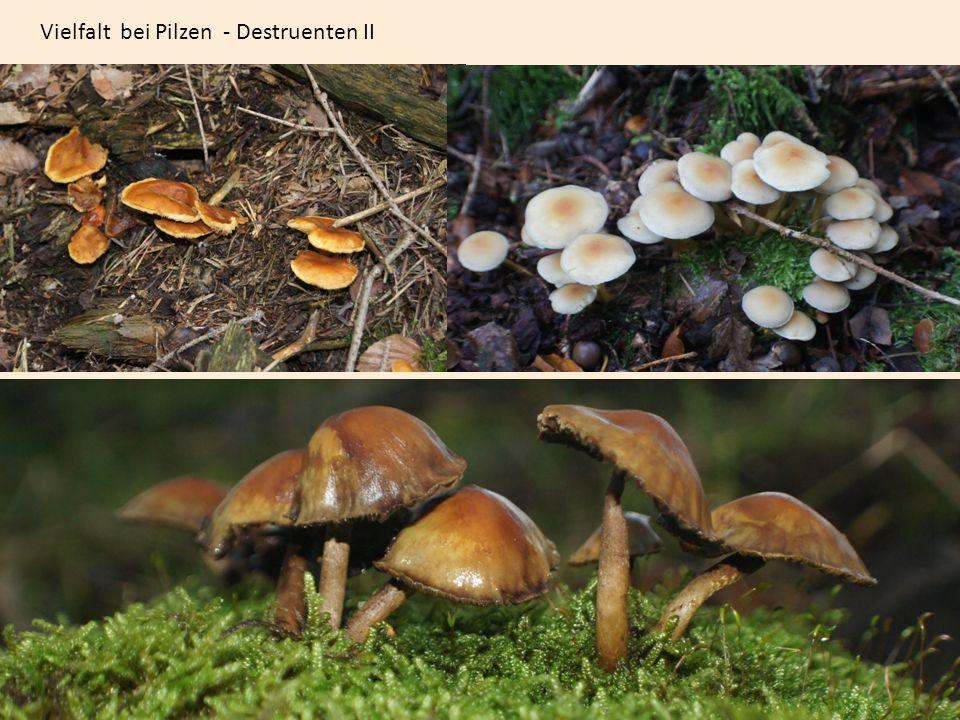Vielfalt bei Pilzen - Destruenten II