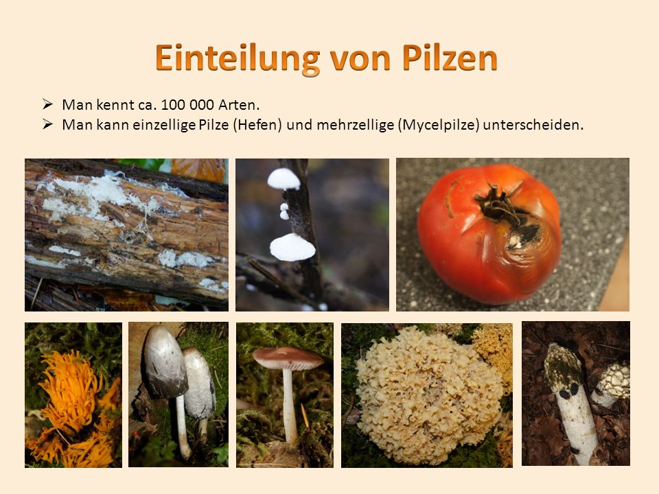 Einteilung von Pilzen Man kennt ca. 100 000 Arten.