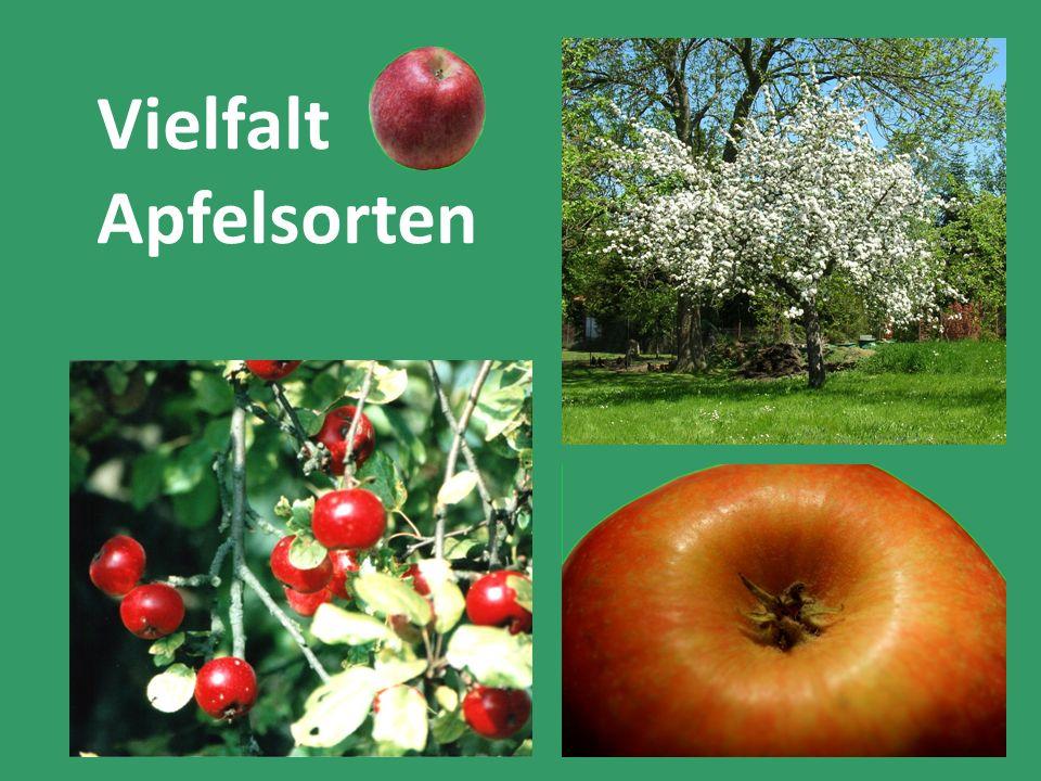 Vielfalt Apfelsorten