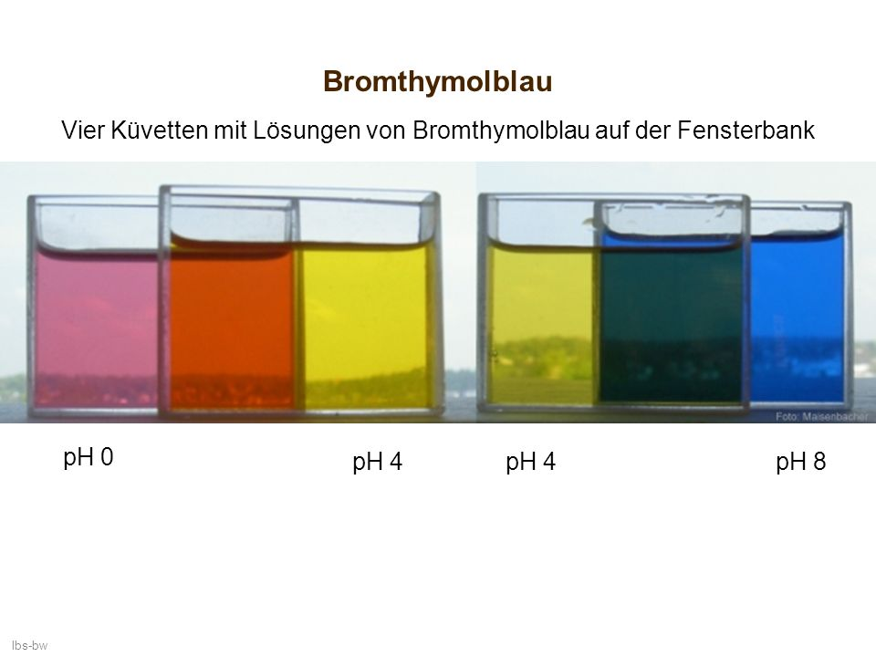 Vier Küvetten mit Lösungen von Bromthymolblau auf der Fensterbank