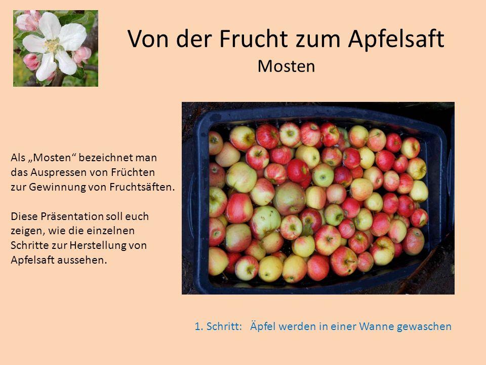 Von der Frucht zum Apfelsaft Mosten