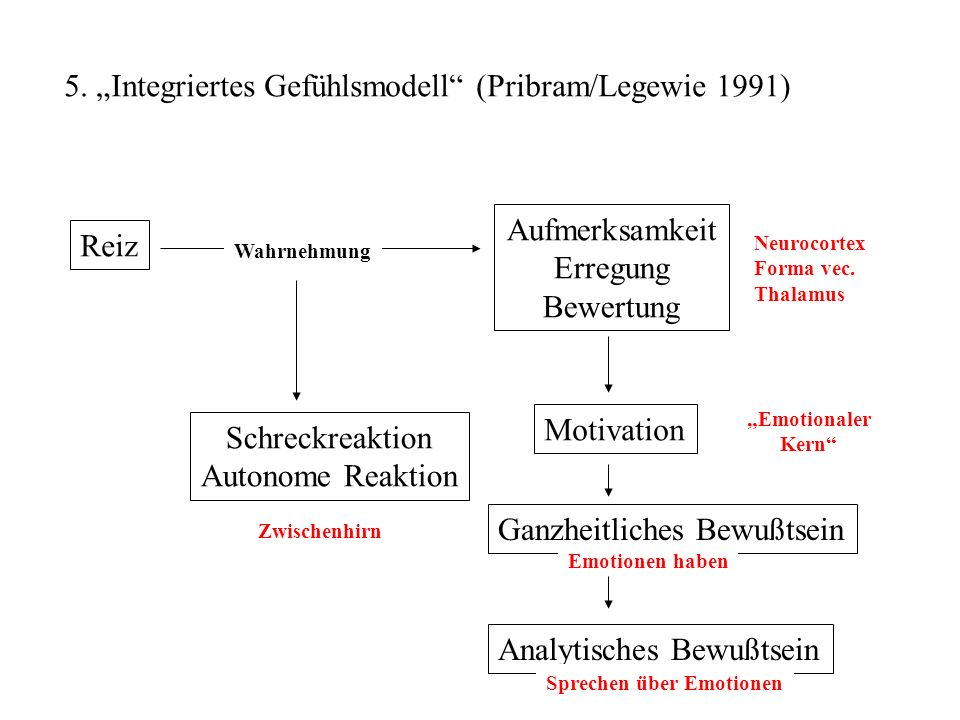 """5. """"Integriertes Gefühlsmodell (Pribram/Legewie 1991)"""