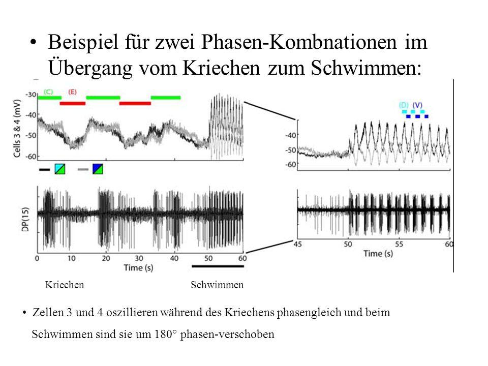 Beispiel für zwei Phasen-Kombnationen im Übergang vom Kriechen zum Schwimmen:
