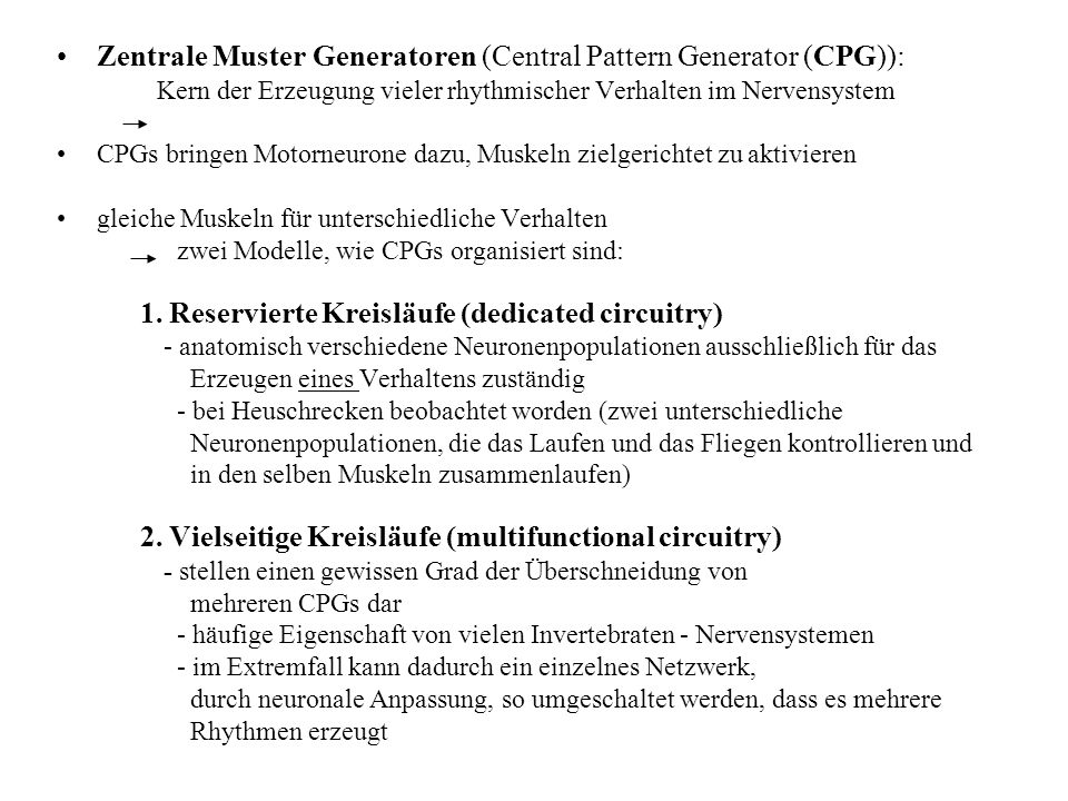 Zentrale Muster Generatoren (Central Pattern Generator (CPG)):