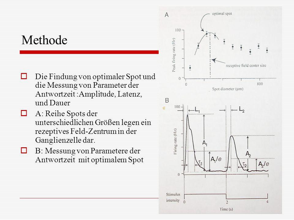 Methode Die Findung von optimaler Spot und die Messung von Parameter der Antwortzeit :Amplitude, Latenz, und Dauer.