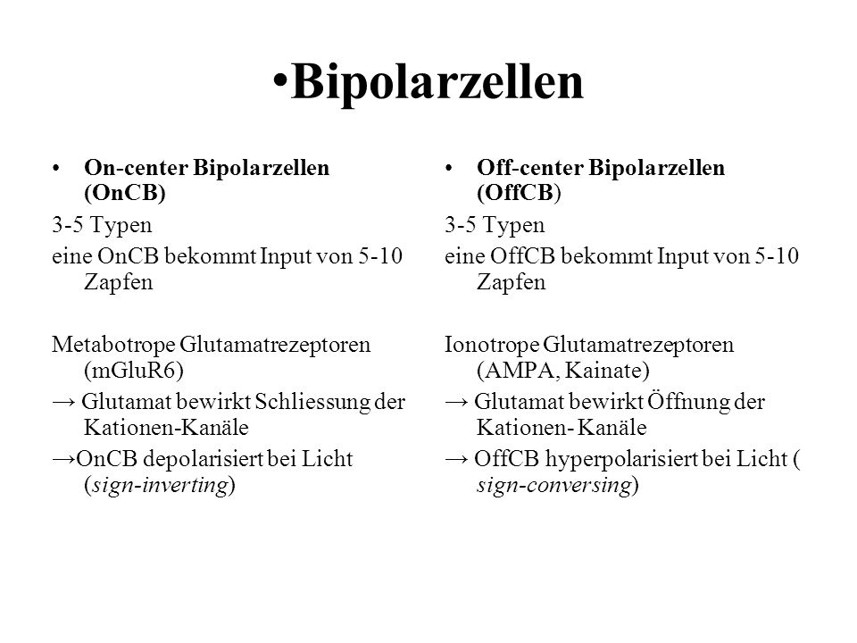 •Bipolarzellen On-center Bipolarzellen (OnCB) 3-5 Typen