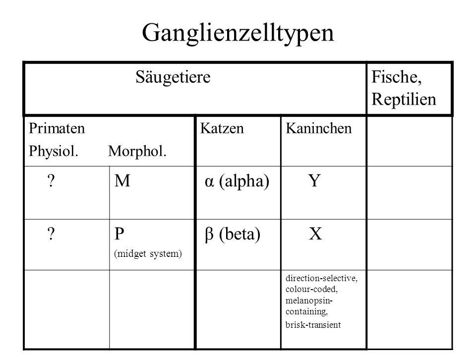 Ganglienzelltypen Säugetiere Fische, Reptilien M α (alpha) Y P
