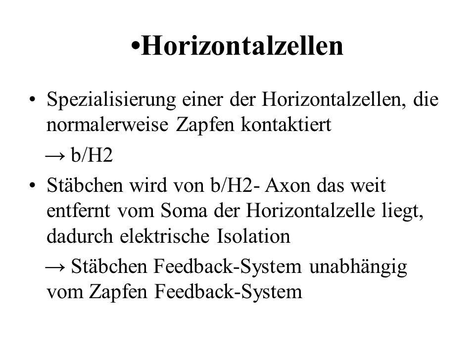 •Horizontalzellen Spezialisierung einer der Horizontalzellen, die normalerweise Zapfen kontaktiert.
