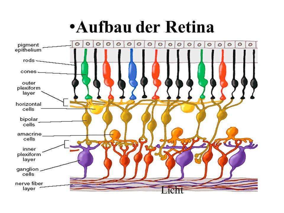 •Aufbau der Retina Licht