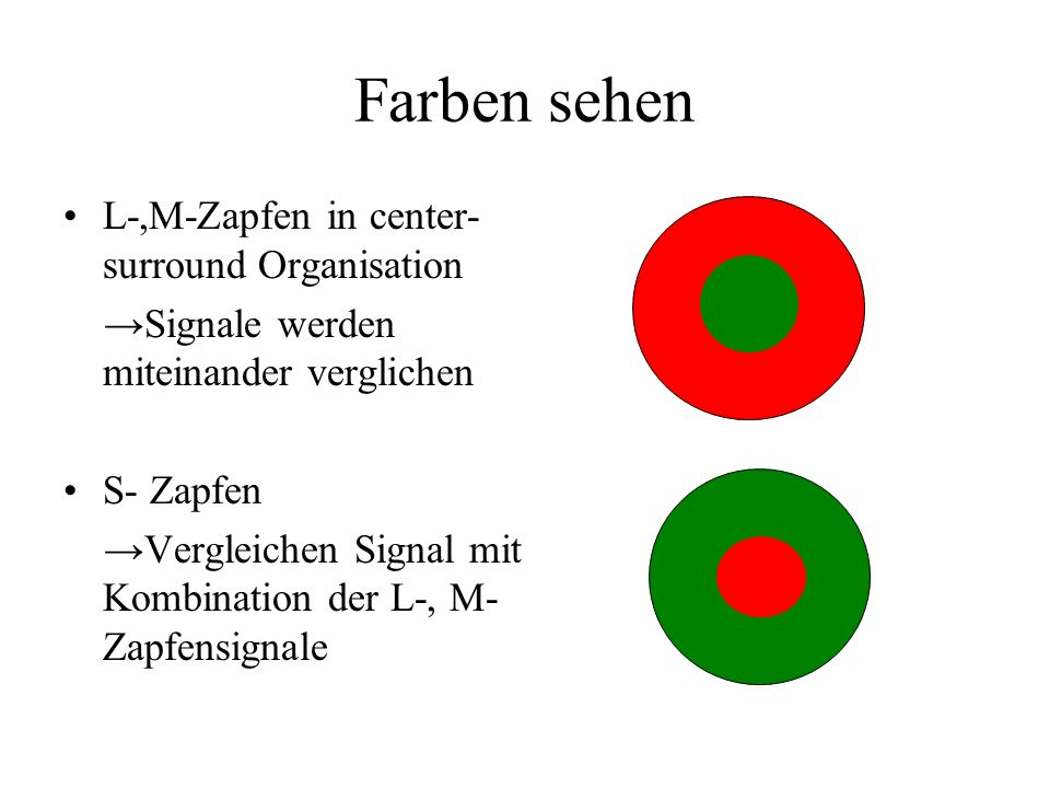 Farben sehen L-,M-Zapfen in center-surround Organisation