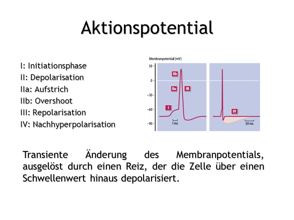 Aktionspotential I: Initiationsphase. II: Depolarisation. IIa: Aufstrich. IIb: Overshoot. III: Repolarisation.
