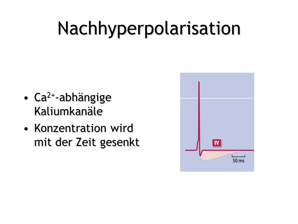 Nachhyperpolarisation