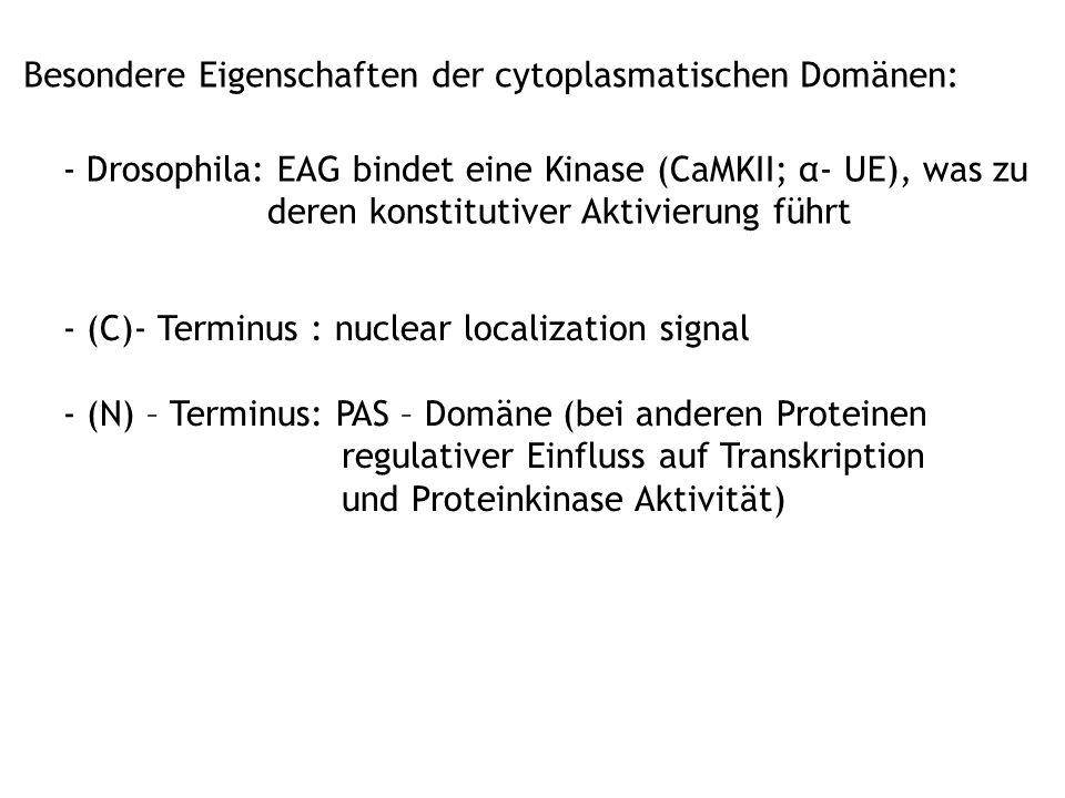 Besondere Eigenschaften der cytoplasmatischen Domänen: