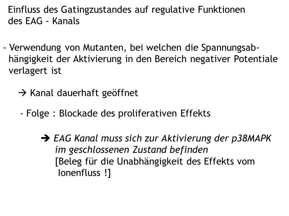 Einfluss des Gatingzustandes auf regulative Funktionen des EAG - Kanals