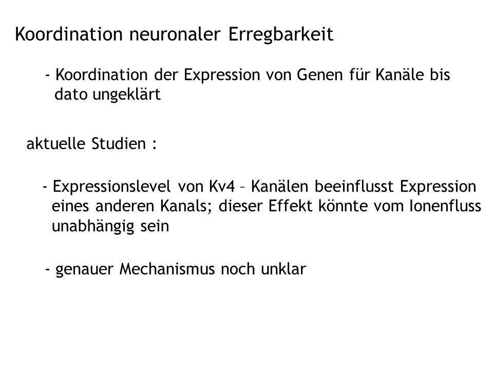 Koordination neuronaler Erregbarkeit