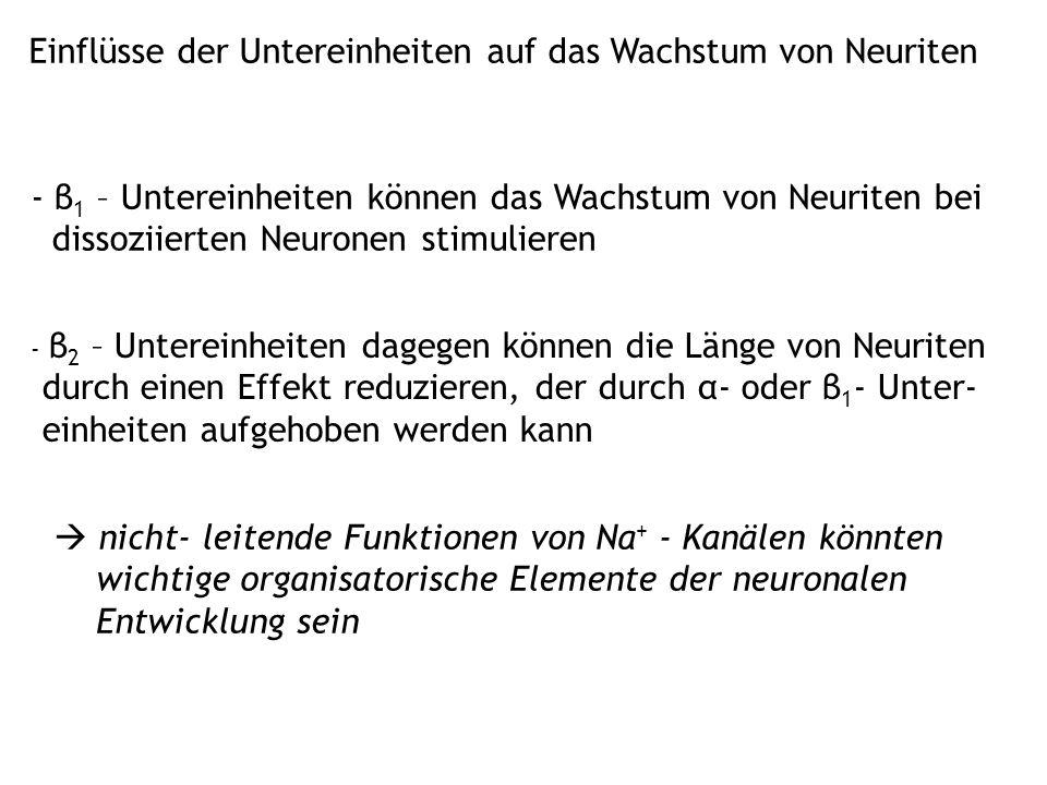 Einflüsse der Untereinheiten auf das Wachstum von Neuriten