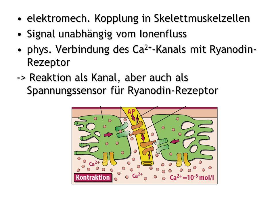 elektromech. Kopplung in Skelettmuskelzellen