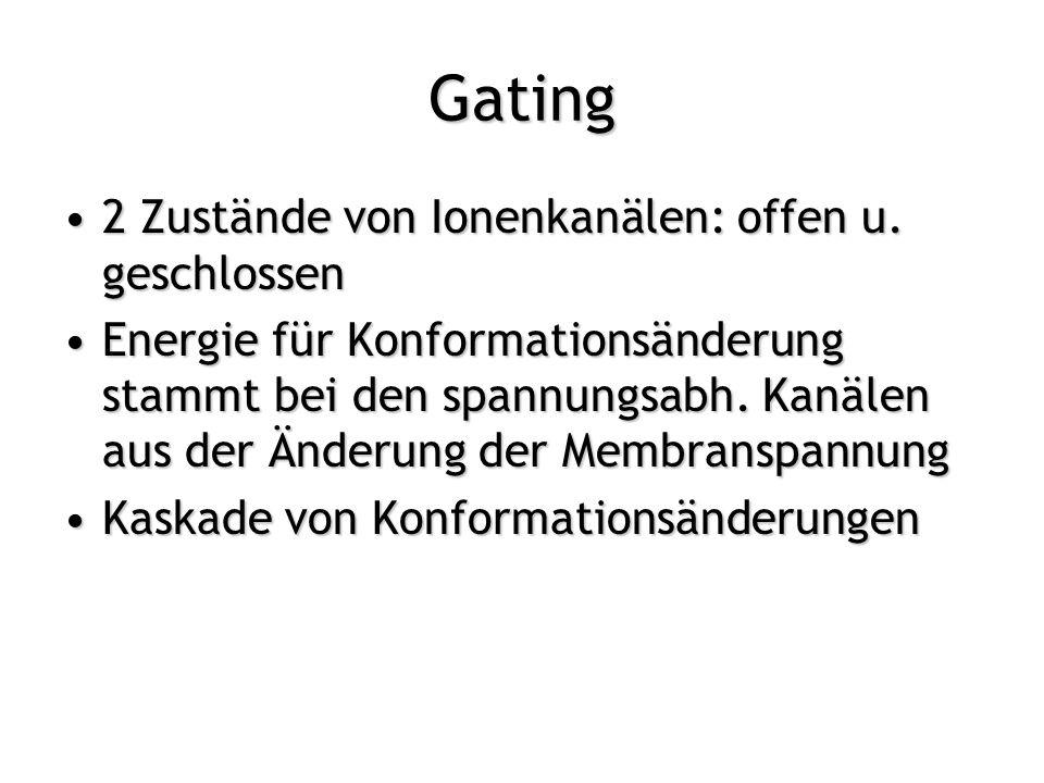 Gating 2 Zustände von Ionenkanälen: offen u. geschlossen