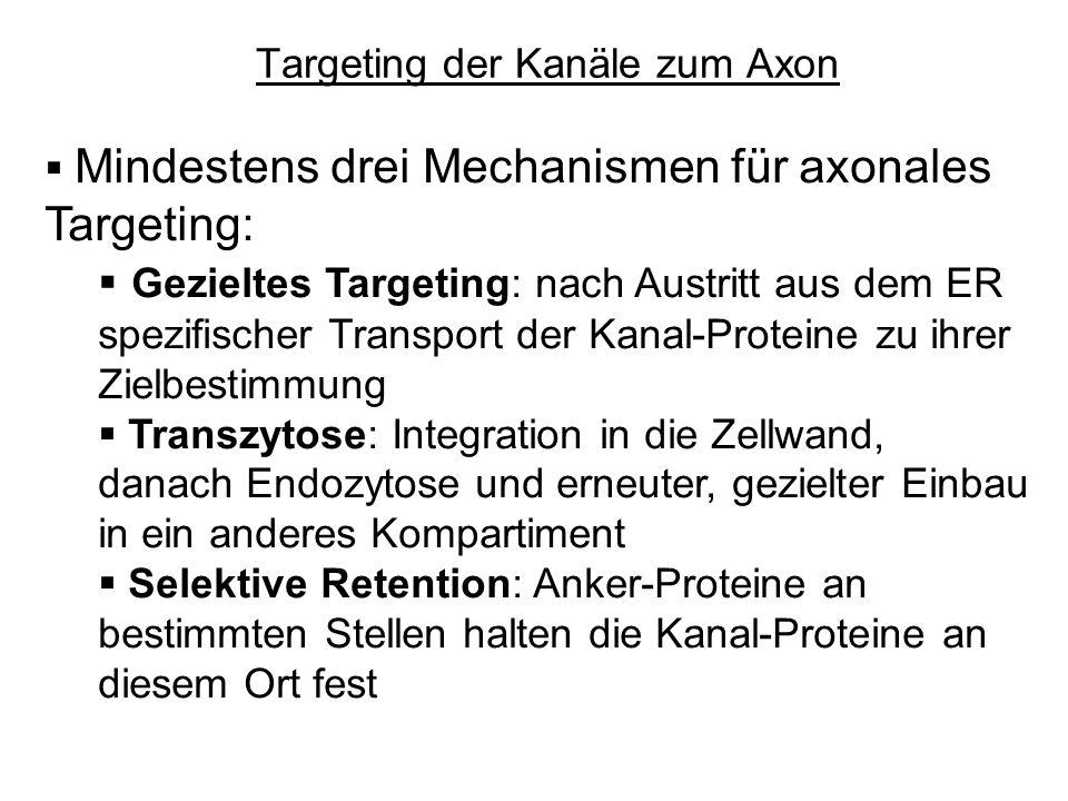 Targeting der Kanäle zum Axon