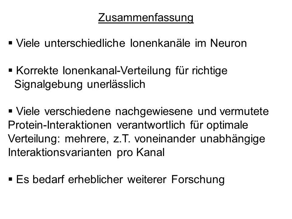 Zusammenfassung Viele unterschiedliche Ionenkanäle im Neuron. Korrekte Ionenkanal-Verteilung für richtige.