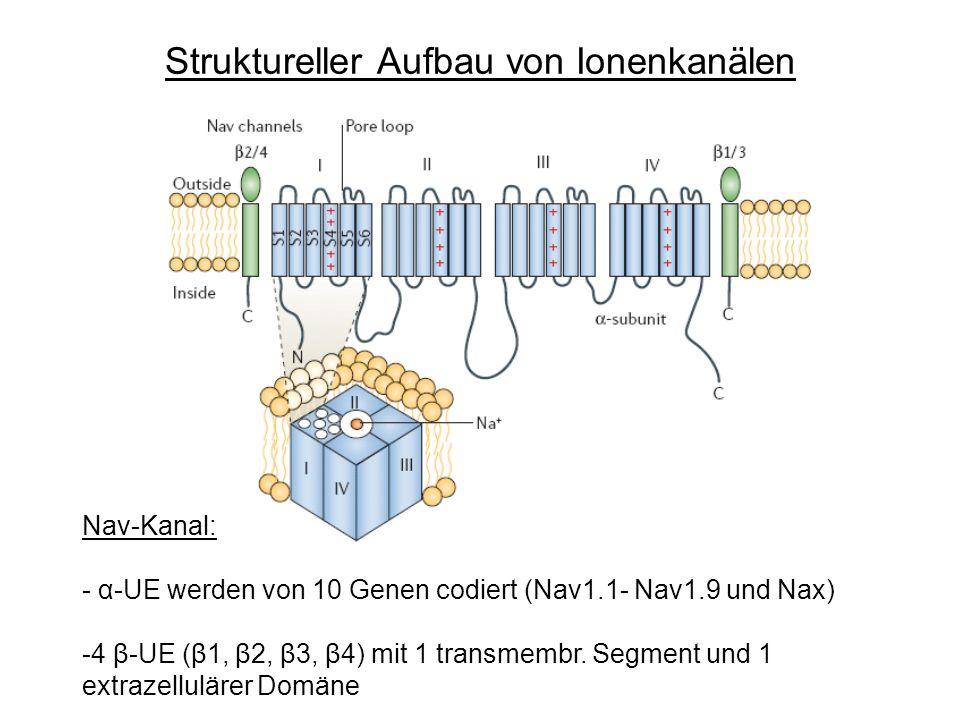 Struktureller Aufbau von Ionenkanälen