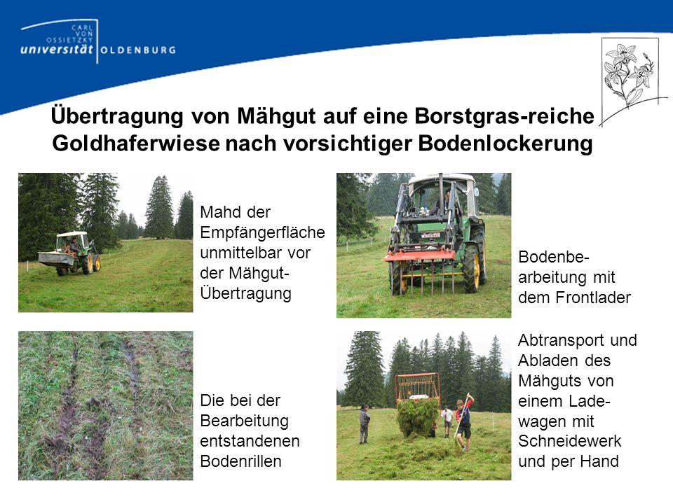 Übertragung von Mähgut auf eine Borstgras-reiche Goldhaferwiese nach vorsichtiger Bodenlockerung
