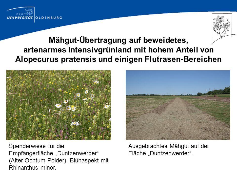 Mähgut-Übertragung auf beweidetes, artenarmes Intensivgrünland mit hohem Anteil von Alopecurus pratensis und einigen Flutrasen-Bereichen